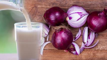 Mor soğanın faydaları nelerdir? Mor soğanı sütle karıştırıp içerseniz...