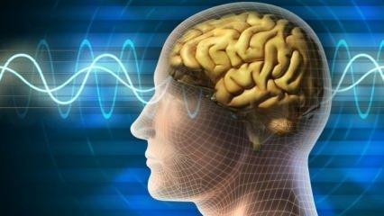 Sonbahar'da beyin gücü zirve yapıyor!