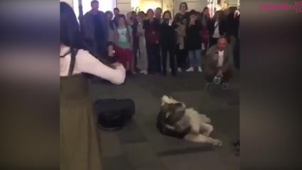 Müziğe sesi ile eşlik eden köpek!