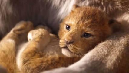 Bir zamanların efsane filmi Aslan Kral beyaz perdede!