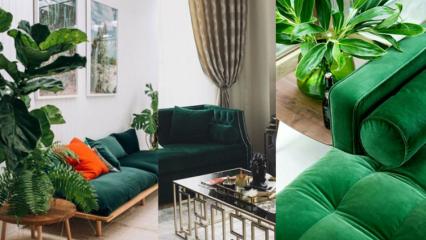 Evde dekorasyonunda çay yeşili modası