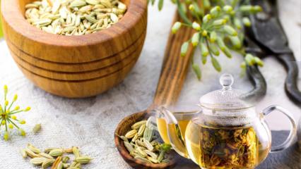 Hızlı zayıflatan ve yağ yaktıran rezene tarifi! Rezene çayı ile nasıl kilo verilir?