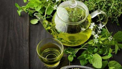 Yeşil çayın faydaları! Yeşil çay diyeti ile hızlı ve sağlıklı zayıflama
