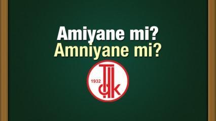 Amiyane olarak mı yazılır? TDK sözlüğü Amniyane olarak mı yazılır?