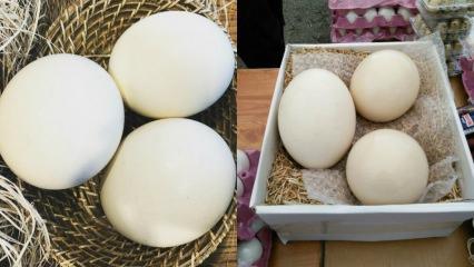 Deve kuşu yumurtasının faydaları nelerdir? Hangi hastalıklara iyi gelir?