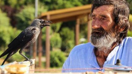 74 yaşındaki çaycı Mehmet Çevik karga ile çay servisi yapıyor!