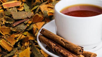 Barut ağacı kabuğunun faydaları nelerdir? Barut ağacı kabuğunun çayı nasıl yapılır?