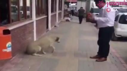 Belediye personeli tatlı dille köpeği yerinden etti!