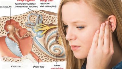 Kulak kristali kayması neden olur? Kulak kristalinin oynamasının belirtileri