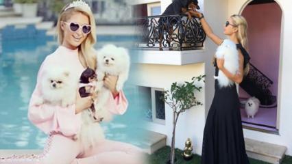 Paris Hilton köpeklerine malikane yaptırdı! Resmen servet ödedi...