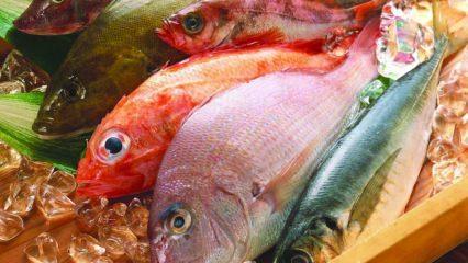 Balığın faydaları nelerdir? Omega-3 yağ asidinin vücuttaki görevleri