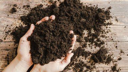 Saksı toprağı nasıl olmalı? Turba yosunu (Torf Toprak) nedir?