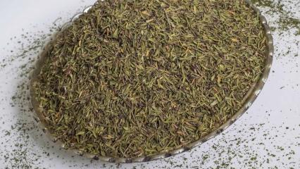 Yüksek oranda toksin atan mucize: Zahterin faydaları nelerdir? Zahter çayı nasıl yapılır?