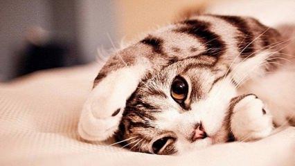 Kedilerin stresi nasıl önlenir? Kedi tüyünün dökülmesi nasıl önlenir?