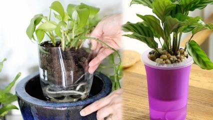 Çiçeklere aşırı su verildiğinde ne yapılmalıdır?