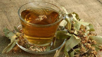 Ihlamurun faydaları nelerdir? Hangi hastalıklara iyi gelir? Ihlamur çayı nasıl yapılır?