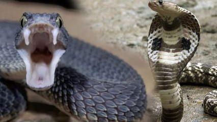 Rüyada yılan görmek kötüye mi yorumlanır? Rüyada yılan görmek neye işaret?