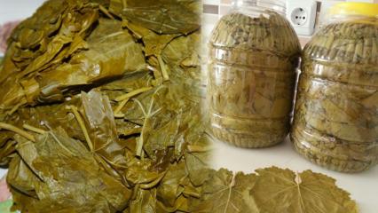 Evde yaprak salamurası nasıl yapılır? Yaprak sarmasının tuzu fazla olursa ne yapılmalı?