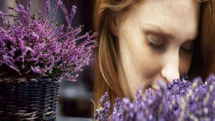 Hangi çiçekler böcekleri evden uzak tutar?