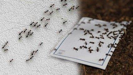 Karınca sürüsünden kurtulmanın yok etmenin yolları: Karıncaya kesin çözüm!