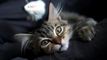 Kedi kumu nasıl temizlenmeli? Kedi Kumu kokusuna karşı ne yapılmalı?