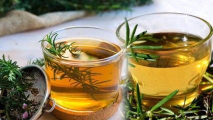Biberiye çayının faydaları! Lezzetli Biberiye çayı tarifi, nasıl demlenir & ne zaman içilir?