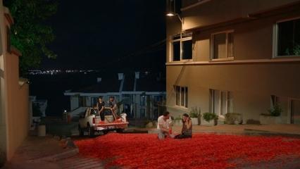 Onur Tuna'dan 100 bin gül yaprağıyla evlilik teklifi!