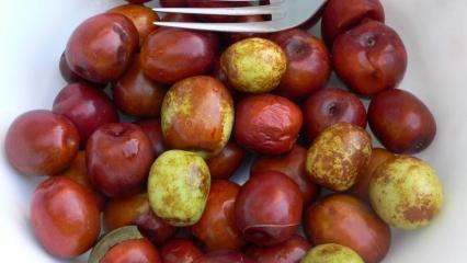 Hünnap meyvesinin faydaları nelerdir? Hünnap çayı nasıl yapılır? Hünnap tüketimi...