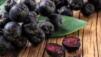 Vücudu baştan aşağıya yenileyen aronya meyvesi faydaları ve besin değerleri