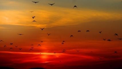 İşrak veya Duha (kuşluk) namazı! Duha namazı nedir? Kuşluk namazı nasıl kılınır?