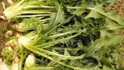 Hindiba nedir faydaları nelerdir? Hindiba çayı ve besin değerleri