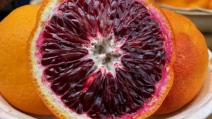 Kan portakal nedir? Kan portakalın faydaları nelerdir? Kan portakalı ne işe yarar?
