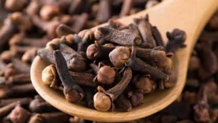 Karanfil çayı faydaları nelerdir? Ağız bakımında karanfil yağı nasıl kullanılır?