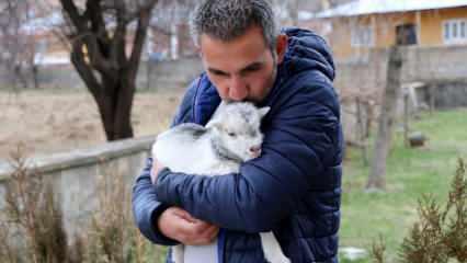 Gazeteciler annesini ayı tarafından yenen bir keçi yavrusunun hayatını kurtardı