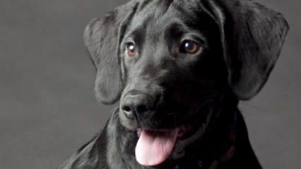 Rüyada siyah köpek görmek nasıl yorumlanır? Siyah köpek kötüye mi işaret