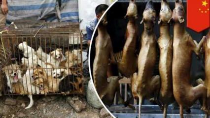 Shenzhen şehri, kedi ve köpek yemeyi yasaklayan ilk Çin kenti oldu