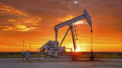 OPEC + koalisyonu petrol üretiminin kısılması konusunda anlaştı