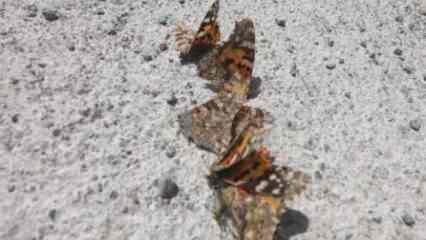 Dikkat çeken sözler: Daha önce hiç görmediğimiz böcek türlerine rastlayacağız