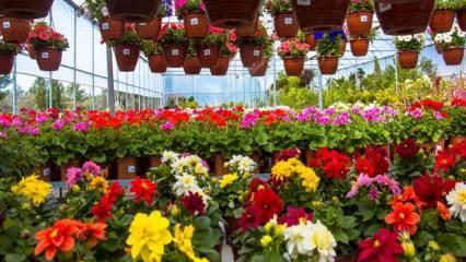 Anneler Günü'nde çiçekçiler açık mı? Anneler Günü'nde çiçek almak isteyenler...