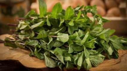 Nanenin faydaları nelerdir? Nane çayı nasıl hazırlanır?
