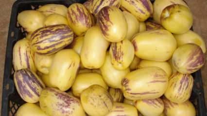 Pepino meyvesinin faydaları nelerdir? Pepino meyvesi tüketimi & Zararı var mı