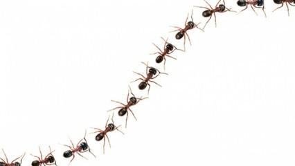 Rüyada karınca görmek ne demek? Rüyada karınca yuvası nasıl tabir edilir?