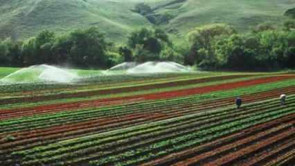 Hangi illerde ücretsiz tarım arazisi verilecek?
