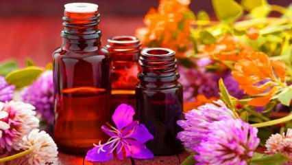 Evdeki böceklerden kurtulmanın yolları   Doğal böcek ilacı nasıl yapılır: İmdadınıza yetişecek!