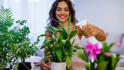 Evdeki çiçekler nasıl coşturulur? Çiçek bakımı için birbirinden pratik bilgiler
