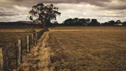 Rüyada toprak görmek ne demek? Rüyada toprak eşelemek neye işarettir?
