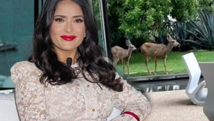 Hollywood yıldızı Salma Hayek evinin bahçesine giren geyikleri sosyal medyada paylaştı!