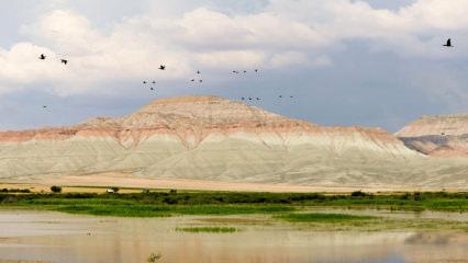 Nallıhan Kuş Cenneti göçmen kuşların en renkli istasyonu