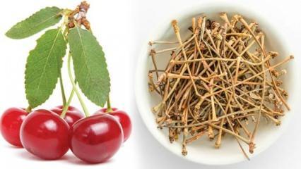 Vişne sapının faydaları nelerdir? Vişne sapı çayı zayıflatır mı?