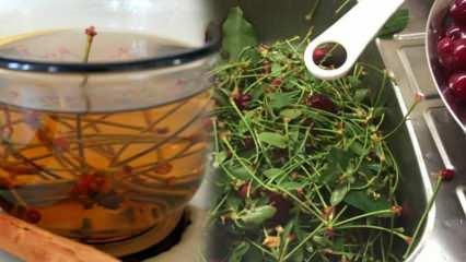 Vişnenin faydaları nelerdir? Vişne suyu ne işe yarar? Vişne sapı çayı nasıl yapılır?